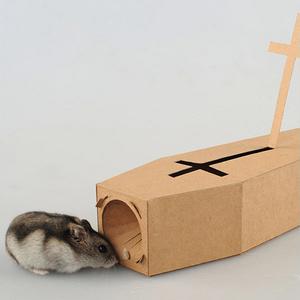 老鼠的葬礼 Mouse's funeral